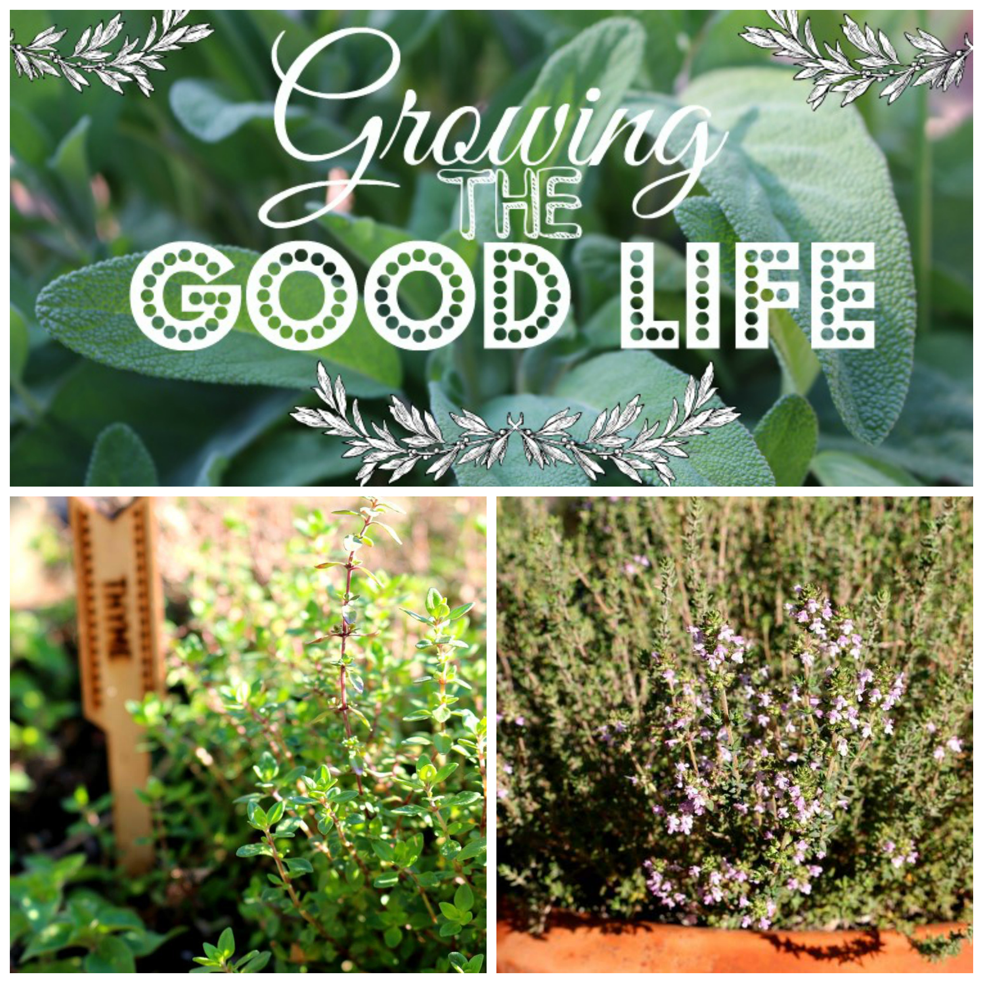 Growing the Good Life