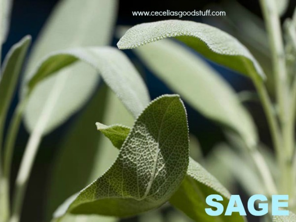 Sage the Herb and its Benefits
