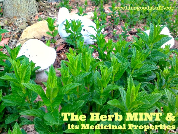 The Herb MINT & its Medicinal Properties