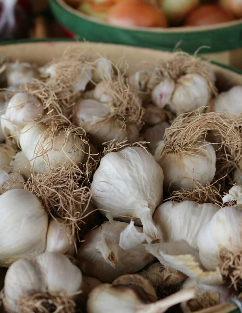 Fresh harvested garlic. CeceliasGoodStuff.com | Good Food for Good People