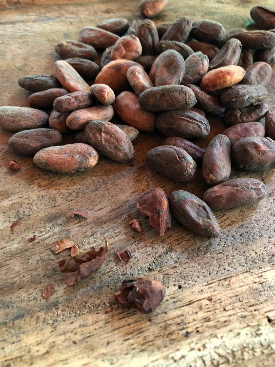 Taking a closer look at the sun dried Cocoa Beans. La Iguana Chocolate Costa Rica